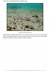 Evaluare ecotoxicologica prin intermediul biotestelor a litoralului romanesc al Marii Negre