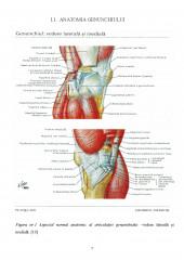 Evaluarea radiologica in patologia genunchiului