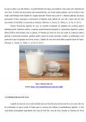 Laptele vegetal